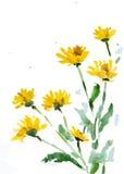 Flor, ilustração do vetor Foto de Stock