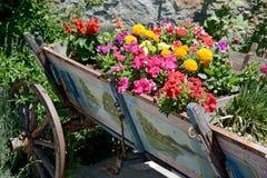 A flor incomum Imagem de Stock Royalty Free