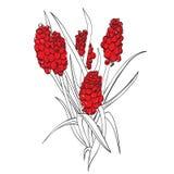 Flor incomun ilustração royalty free