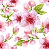 Flor inconsútil exhausta de Sakura del ciruelo del melocotón de Cherry Blossom del modelo del fondo de la mano inspirada por yuka libre illustration