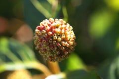 Flor innomado de un arbusto salvaje. Fotos de archivo libres de regalías