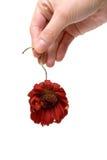 Flor inoperante foto de stock