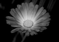 Flor isolada branca e verde Foto de Stock