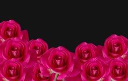 Flor isolada da rosa do vermelho no fundo preto (com trajeto de grampeamento Fotografia de Stock Royalty Free