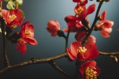 Flor japonesa Fotografia de Stock