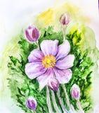 Flor japonesa das anêmonas. Fotografia de Stock
