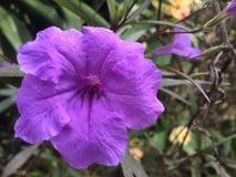 Flor, jardín, púrpura imagen de archivo libre de regalías