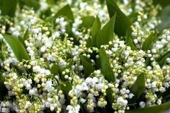 Flor, lírio do vale imagem de stock royalty free