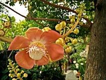 flor, licencia Imagen de archivo