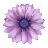 Flor lilás com gota da água Fotografia de Stock Royalty Free