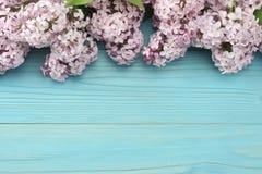 flor lilás cor-de-rosa no fundo de madeira azul Vista superior com espaço da cópia Fotografia de Stock Royalty Free