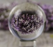 Flor lilás indicada através de uma bola de vidro imagens de stock