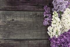 Flor lilás no fundo de madeira rústico com espaço vazio Fotos de Stock