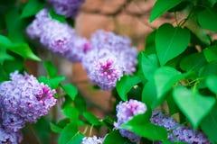 Flor lilás no lado da estrada imagem de stock
