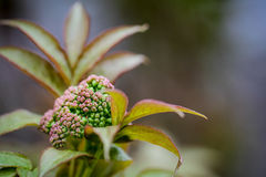 Flor lilás nova no tempo de mola imagens de stock royalty free