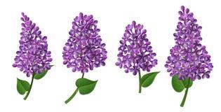 Flor lilás para a mola e a Páscoa ilustração royalty free