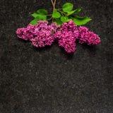 A flor lilás ramifica na bancada antiga do granito de Brown Imagens de Stock