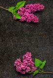 A flor lilás ramifica na bancada antiga do granito de Brown Fotos de Stock