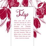 Flor linear das tulipas do esboço Imagens de Stock Royalty Free