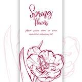 Flor linear das tulipas do esboço Fotografia de Stock