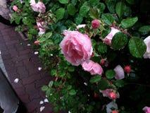 Flor lluviosa Fotos de archivo libres de regalías