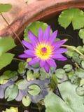 Flor Lotus fotografía de archivo