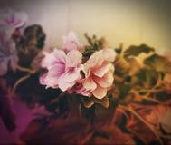 Flor mágica Imagem de Stock Royalty Free