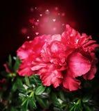 Flor mágica da azálea em corações festivos de um bokeh do fundo Imagem de Stock Royalty Free