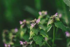 Flor mágica de la ortiga y hojas verdes fotografía de archivo libre de regalías