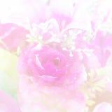 Flor macia do rosa do tom Fotos de Stock Royalty Free