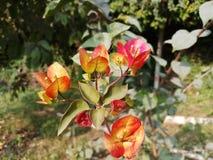 Flor macra Fotografía de archivo