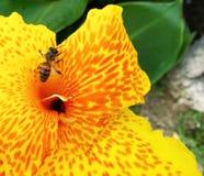 Flor macra amarilla Fotos de archivo libres de regalías