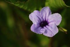 Flor macra de la foto imagenes de archivo