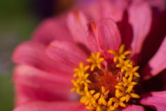 Flor macra en la luz del sol fotos de archivo