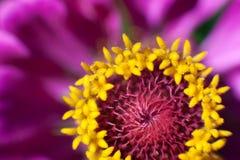 Flor macra en la luz del sol foto de archivo libre de regalías