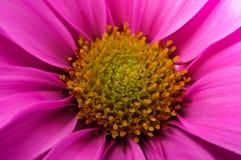 Flor macro Imagens de Stock