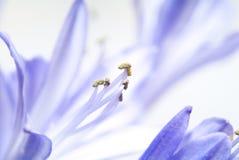 Flor. macro fotografía de archivo libre de regalías