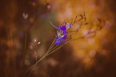 Flor macro Fotografia de Stock Royalty Free