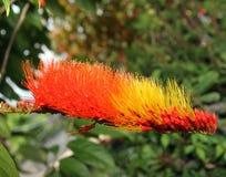 Flor macro da flor imagem de stock royalty free