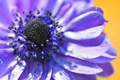 Flor macro roxa Imagens de Stock