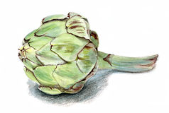 Flor madura de la alcachofa Imagenes de archivo