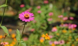 Flor magenta Imagen de archivo libre de regalías