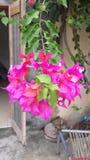 Flor magenta Fotos de archivo