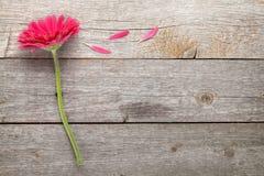 Flor magenta del gerbera Fotografía de archivo libre de regalías