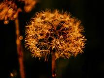 Flor maravillosa foto de archivo