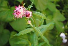 Flor maravillosa 1 Fotos de archivo