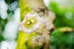Flor mexicana de la calabaza fotos de archivo libres de regalías