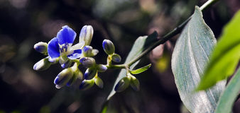 Flor minúscula e surpreendente gravada em permanecer da floresta úmida Fotos de Stock