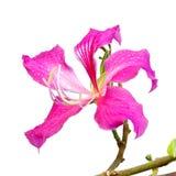 Flor mojada Foto de archivo