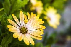 Flor mojada Imagenes de archivo